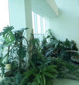 шестой этаж растения
